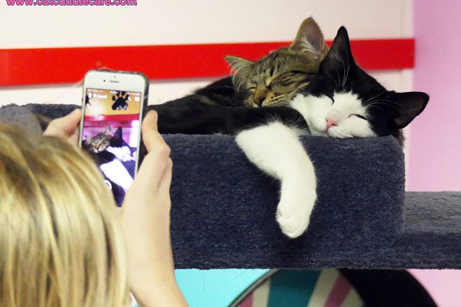 Cat Cuddle Cafe, Brisbane, Australia