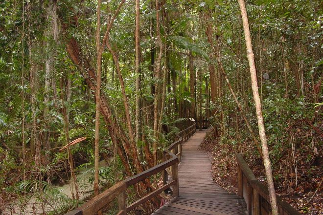 Central Station Rainforest, Fraser Island, Australia
