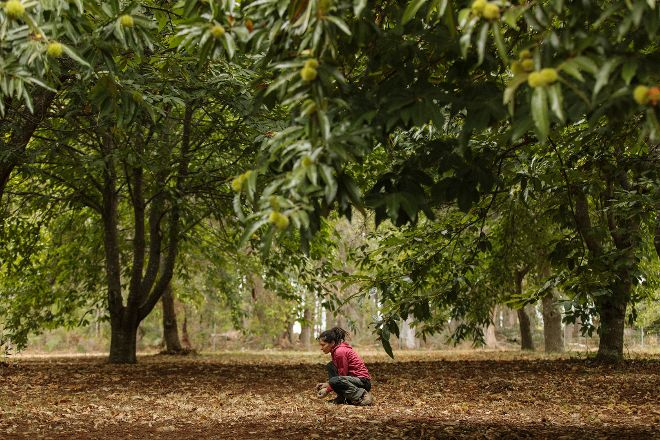 Chestnut Brae Farm, Nannup, Australia