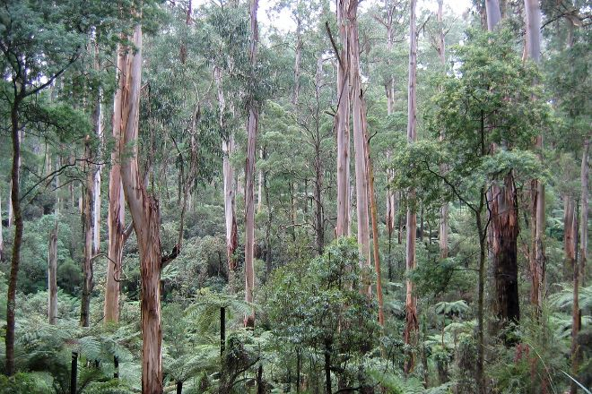 Dandenong Ranges National Park, Melbourne, Australia