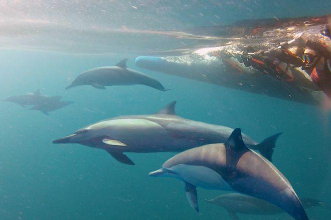 Dolphin Swim Australia, Nelson Bay, Australia