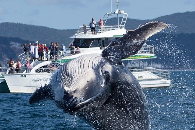 Hervey Bay Whale Watch, Urangan, Australia