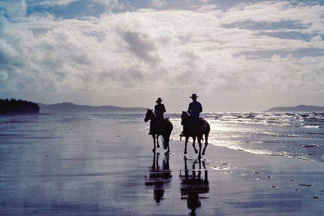 Horses in Port, Port Douglas, Australia