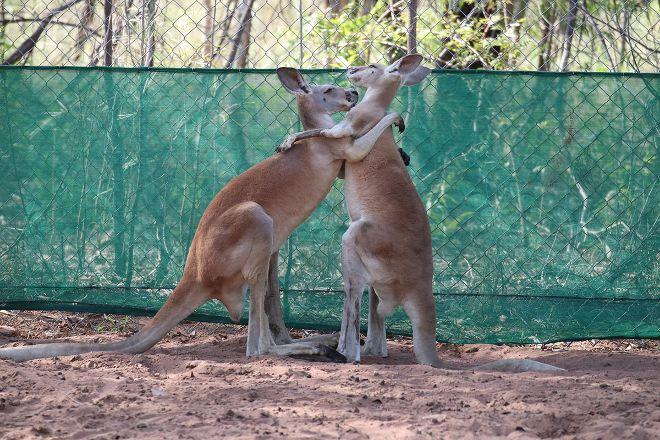 Kangaroo Haven, Kununurra, Australia