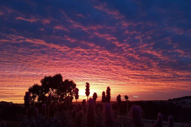 Lyndoch Lavender Farm, Lyndoch, Australia