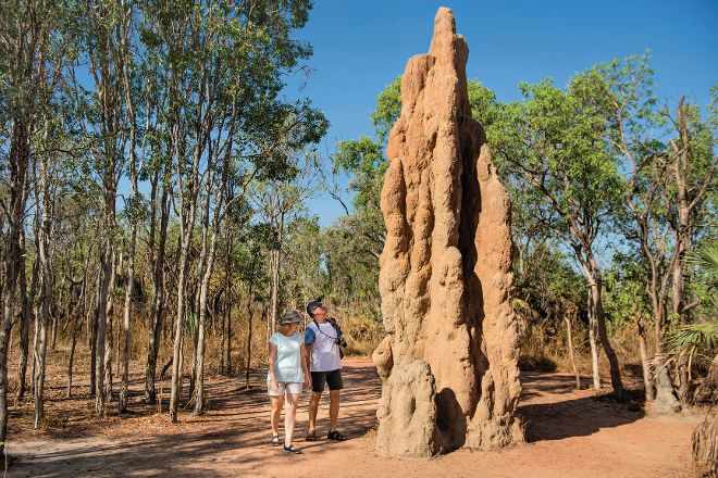 Magnetic Termite Mounds, Litchfield National Park, Australia