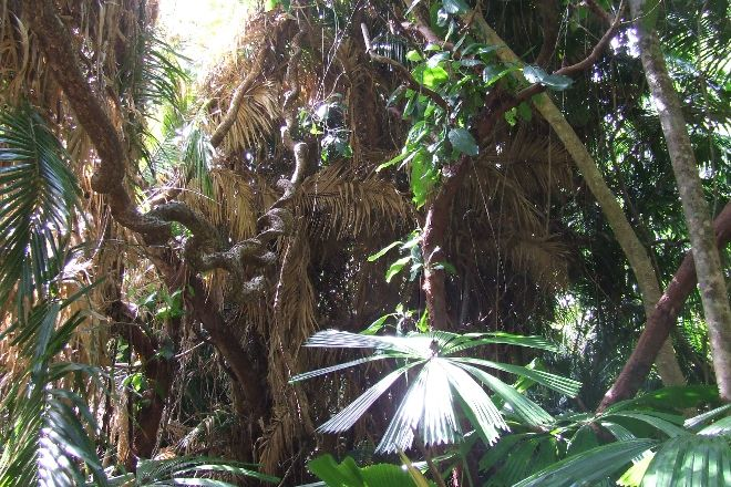 Marrdja Botanical Walk, Cape Tribulation, Australia