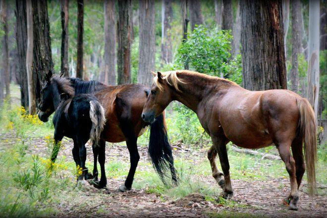 Mountain Ash Trails, Tumbarumba, Australia