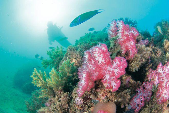 Ningaloo Reef Dive, Coral Bay, Australia