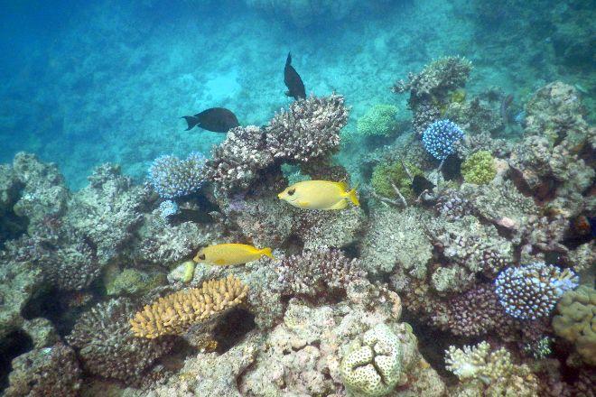 Opal Reef, Port Douglas, Australia