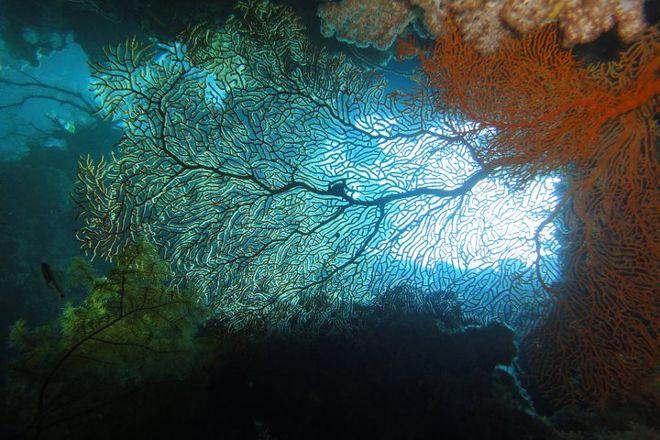Passions of Paradise Reef Tour, Cairns, Australia