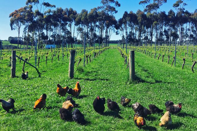 Pierrepoint Wines, Tarrington, Australia