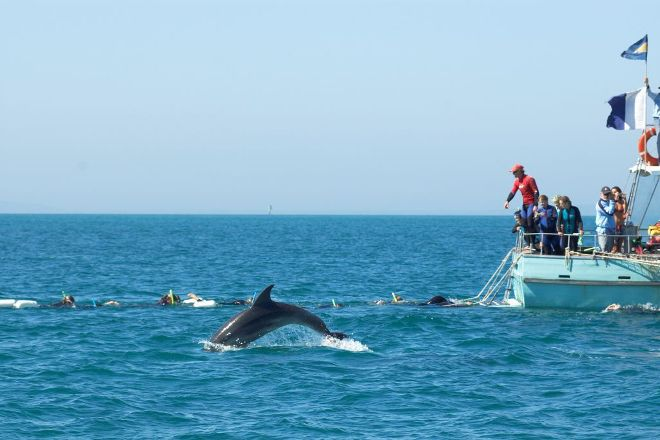 Sea All Dolphin Swims, Queenscliff, Australia
