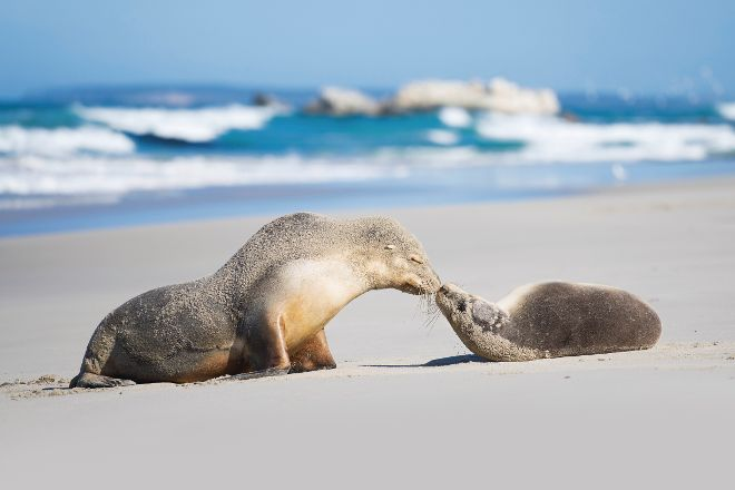 Seal Bay Conservation Park, Seal Bay, Australia