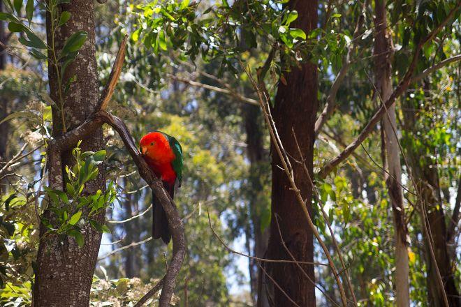 Sherbrooke Forest, Melbourne, Australia