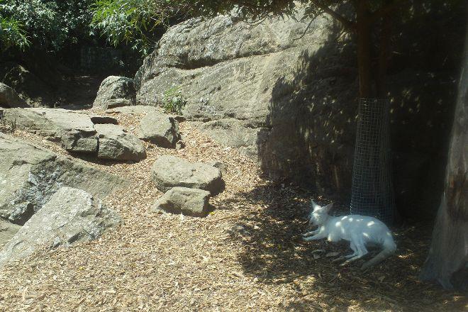 Shoalhaven Zoo, Nowra, Australia