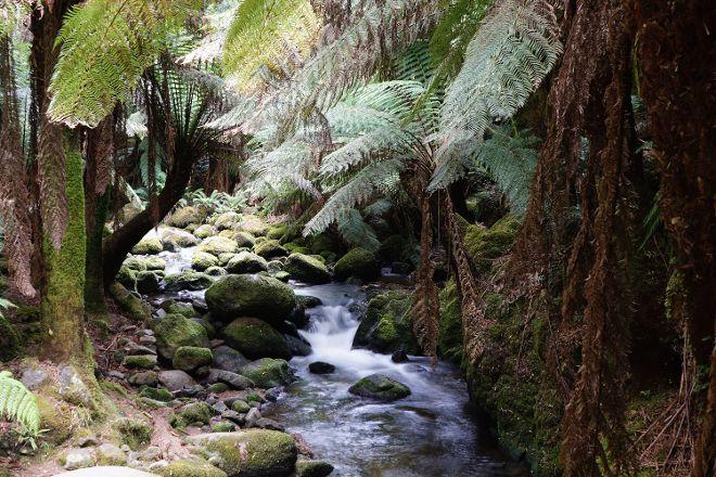 St Columba Waterfall, Pyengana, Australia