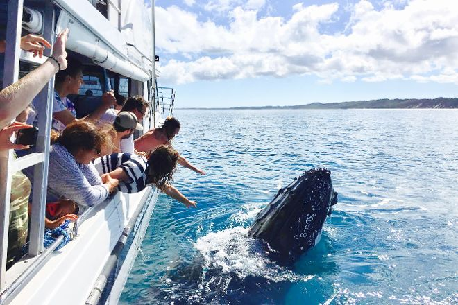 Tasman Venture - Day Tours, Hervey Bay, Australia