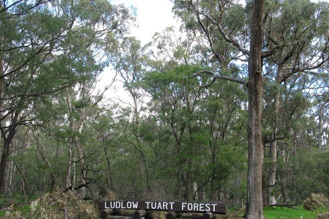 Tuart Forest National Park, Busselton, Australia