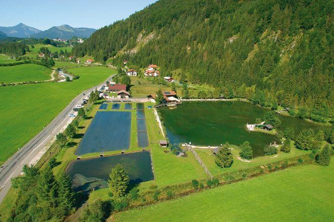 Quellfisch Fischteich Schwendt, Schwendt, Austria