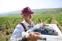 Meyseri Wines, Meysary, Azerbaijan