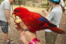 Ardastra Gardens & Wildlife Conservation Centre, Nassau, Bahamas