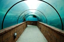 Marine Habitat at Atlantis, Paradise Island, Bahamas