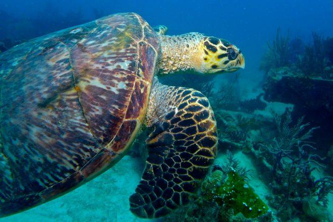 Hazell's Water World, Bridgetown, Barbados