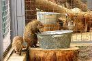 Grodno Zoo