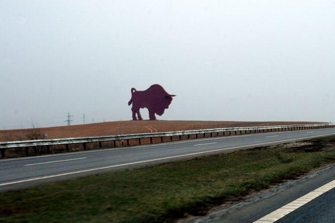 Bison on Route Brest - Minsk, Brest, Belarus