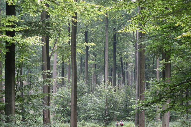 Sonian Forest, Brussels, Belgium