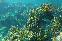 Glover's Reef Marine Reserve, Hopkins, Belize
