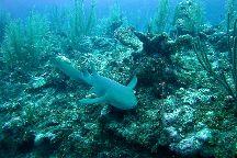 Mesoamerican Reef (Belize Barrier Reef), Belize District, Belize