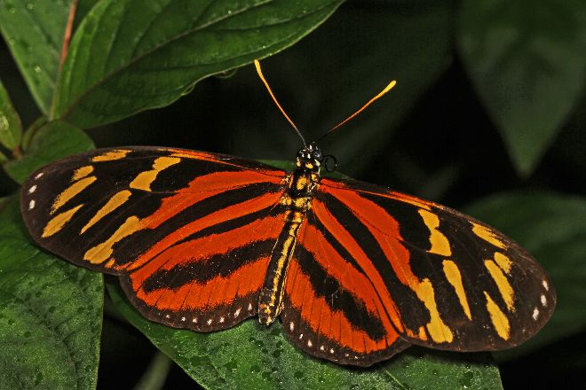 Green Hills Butterfly Ranch, Cayo, Belize