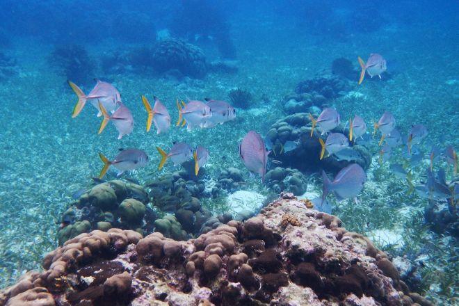 Hol Chan Marine Reserve, San Pedro, Belize