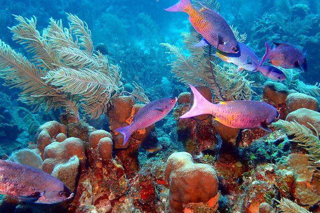 Turneffe Reef, Caye Caulker, Belize