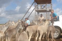 Donkey Sanctuary Bonaire, Bonaire