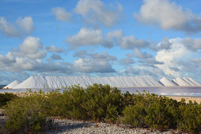 Pekelmeer Flamingo Sanctuary, Bonaire