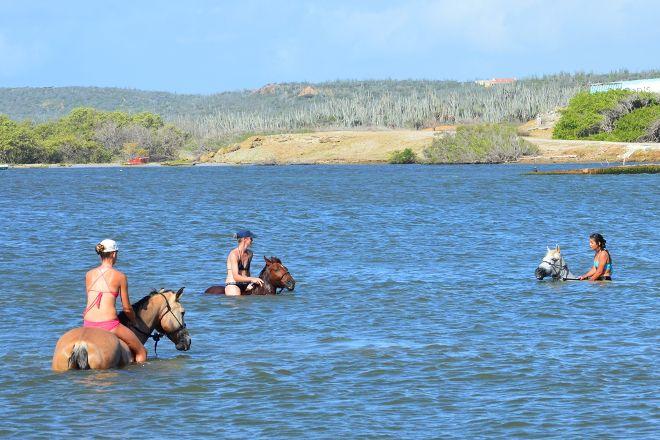 Rancho Washikemba Horse Ranch Bonaire, Kralendijk, Bonaire