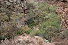 Moremi Gorge