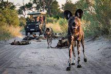 Gondwana Tours & Safaris, Maun, Botswana