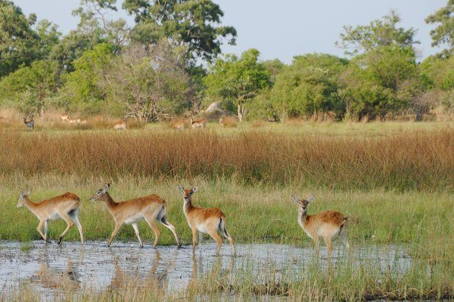Moremi Wildlife Reserve, Moremi Game Reserve, Botswana