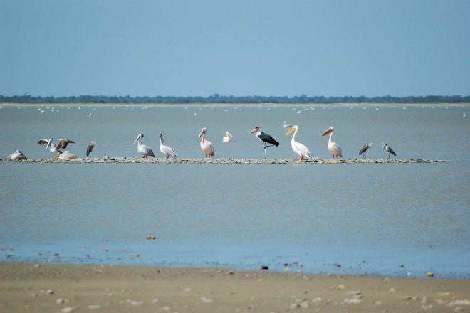 Nata Bird Sanctuary, Nata, Botswana
