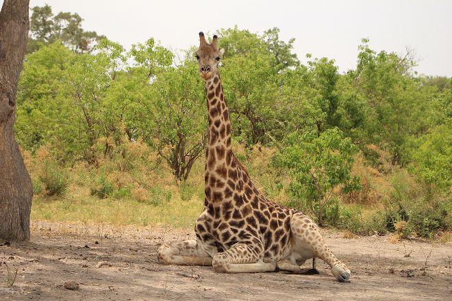 Wild Africa Safaris, Kasane, Botswana