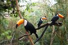 Parque das Aves Bird Park