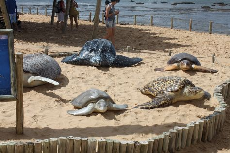 Projeto Tamar, Praia do Forte, Brazil