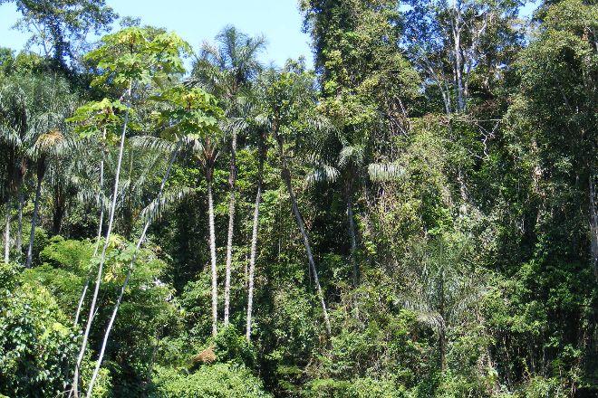 Amazon Rainforest, State of Amazonas, Brazil