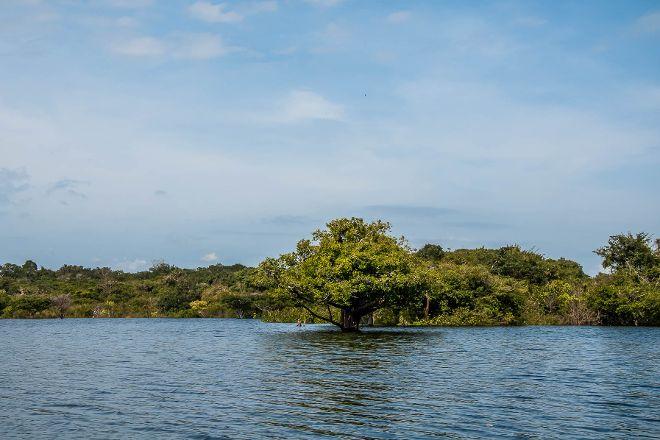 Arquipelago de Anavilhanas, Manaus, Brazil