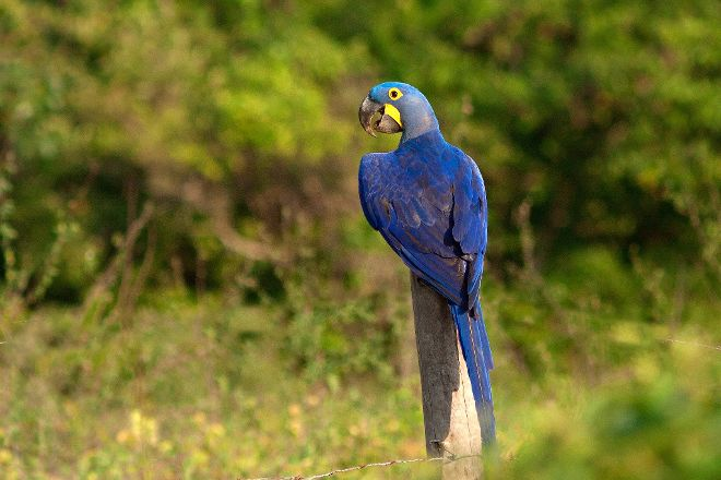 Wild Pantanal, Cuiaba, Brazil
