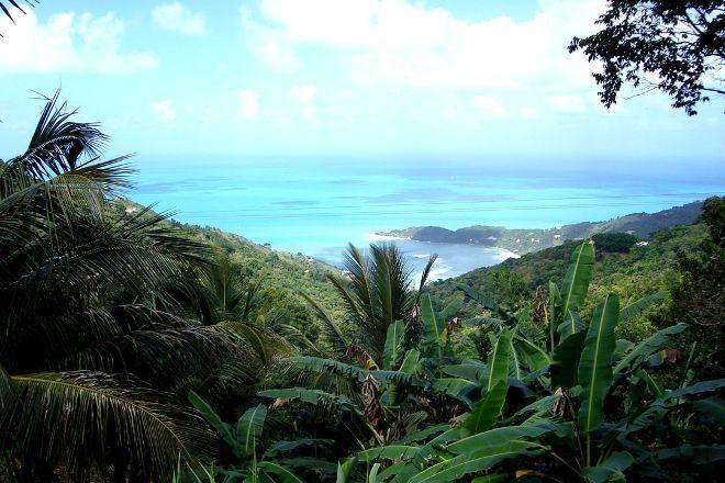Sage Mountain National Park, Tortola, British Virgin Islands